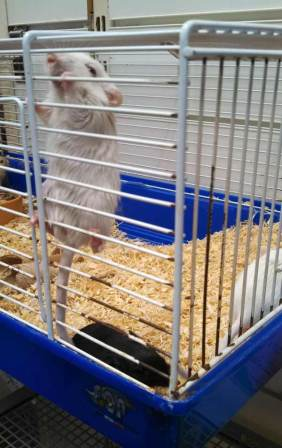 Mice in a pet shop, Midleton, Cork, August 9th